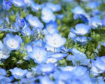 【人気ランキング】毎日更新!アクセス数の多い人気いちご農園をエリア別に紹介